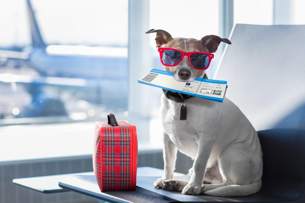 pets on a plane