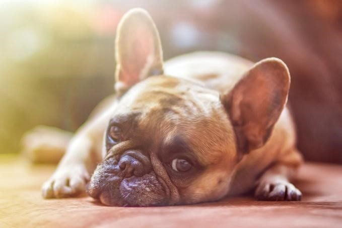 Signs and Symptoms of Worms in Dogs