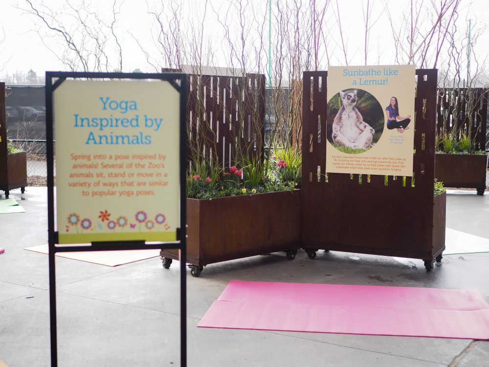 xZooberance at the Indianapolis Zoo Yoga Inspired by Animals